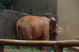 Verklemmtheit ablegen - verklemmter Elefant